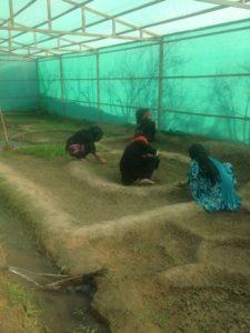 Village Greenhouse